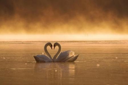 Наскільки важливою є закоханність. Якби не було закоханності, тоді хто б одружувався?