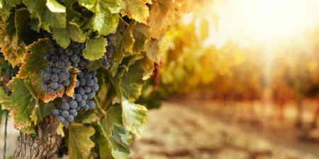 """""""Притча про злих виноградарів"""" - коментар Євангелія дня"""